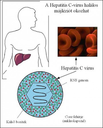 Vírusos hepatitis